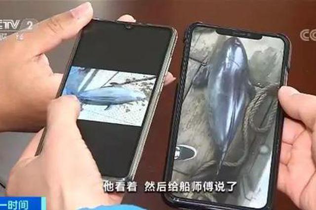 """5天2只江豚死亡 实地调查水下的""""黑手""""到底是啥?"""