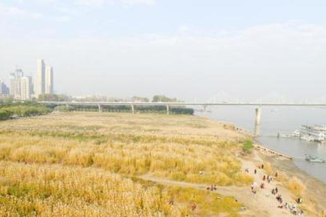 武汉打造百公里滨江画廊 已建成江滩里程逾70公里