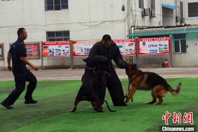 """宜昌特警开展反恐实战演练 警犬成""""特种兵"""""""
