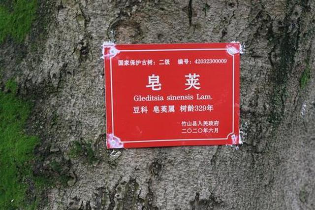 """十堰竹山县为630棵古树名木发放""""身份证"""""""