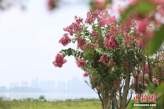 湖北襄阳:援襄医疗队纪念林开花了