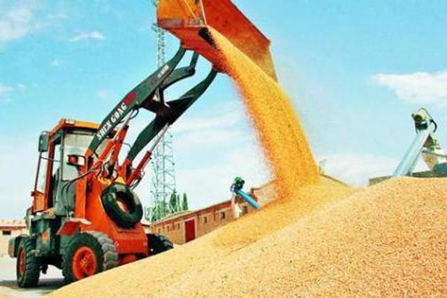 夏粮大丰收小麦的收购量却减少了?业内:农民惜售