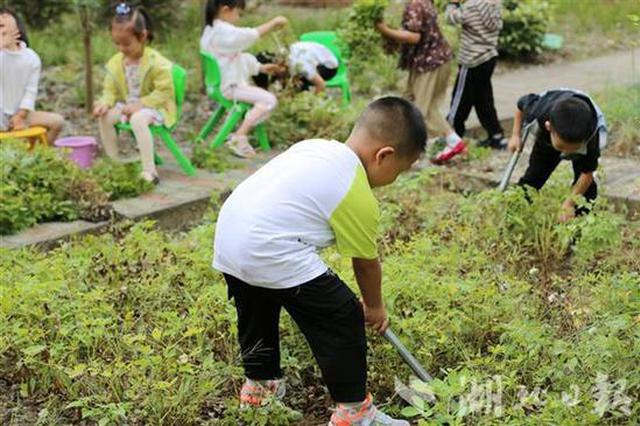 现实版开心农场!湖北竹山一幼儿园设开心农场十年