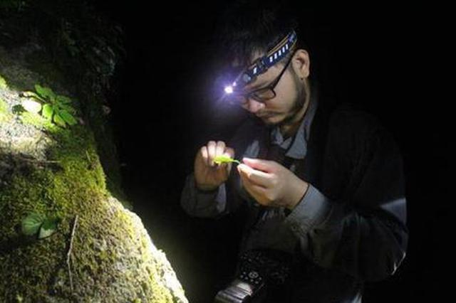 湖北一科研团队穿越九宫山普查240种蜘蛛