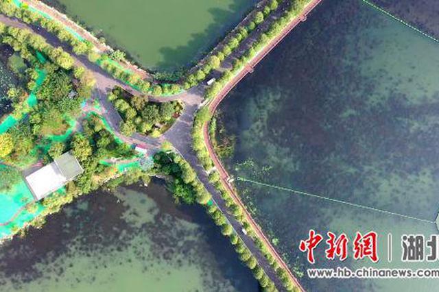 """武汉东湖重现2.6万平方米""""水下森林""""(图)"""