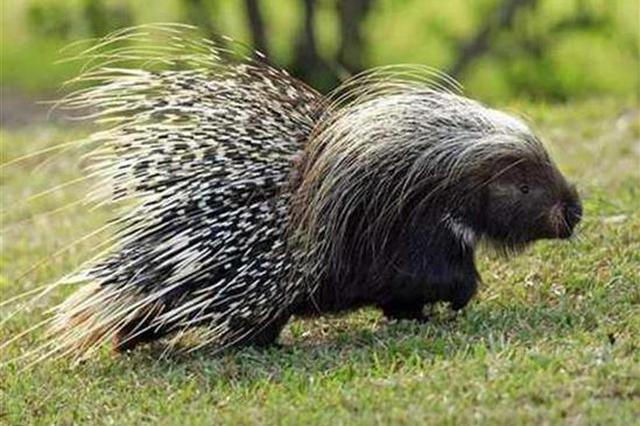 明确了!年底前 这45种野生动物停止养殖