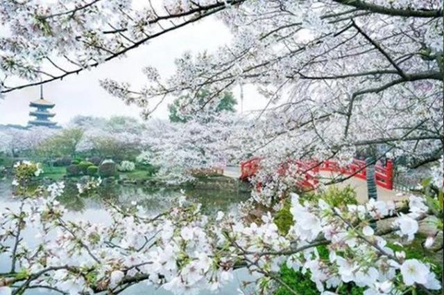 武汉樱花种质资源库入选国家库