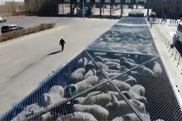 中蒙举行蒙古向中国捐赠羊交接仪式 首批4000只入境