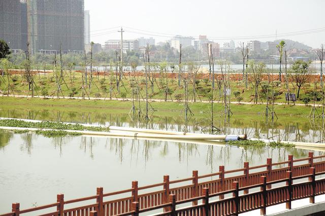 嘉鱼小湖整治优化施工方案 造一座湖心岛给鸟栖息