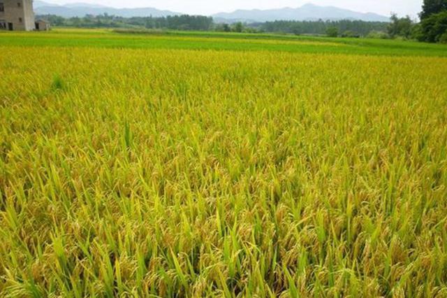 武汉高标准农田建设项目惠及7万余名农民