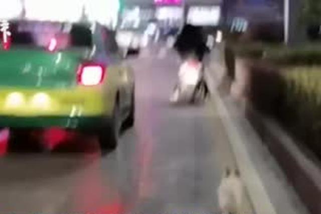 襄阳一流浪狗路遇恩人跟车三公里:曾数次喂食
