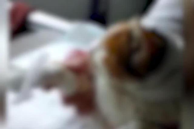 襄阳又有小猫遭挖眼剥皮施虐者疑懂医术 警方已介入