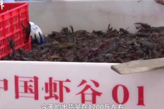 潜江小龙虾陆续上市 虾农:天气暖出虾较早