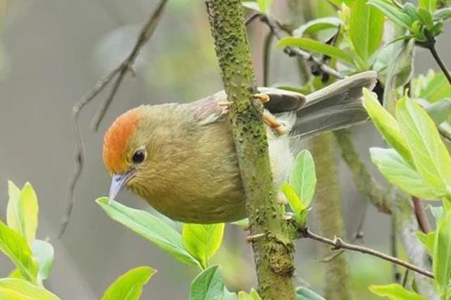 武汉重点区域3月监测记录鸟类190种