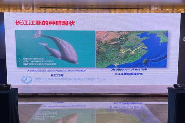 武汉开展多次科考促长江江豚重回城区江段
