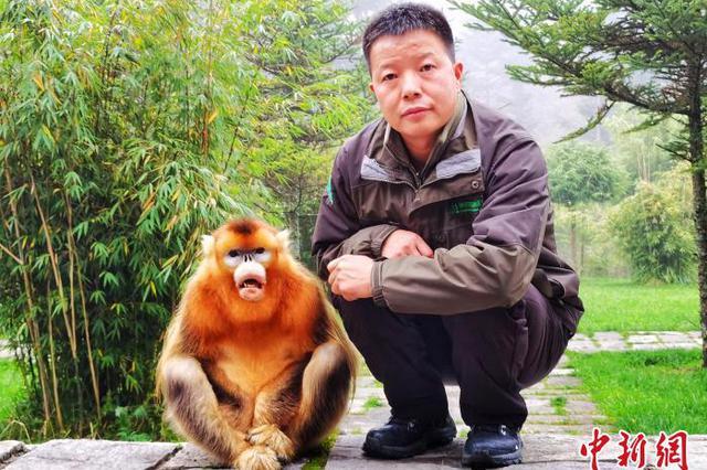 """神农架""""护猴人"""":与金丝猴如家人朋友般亲近"""