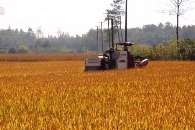 湖北今年再投入1亿元建设粮食应急体系