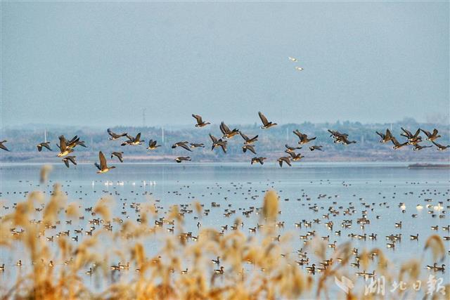 """武汉5年将建80个湿地公园 大力打造""""湿地花城"""""""