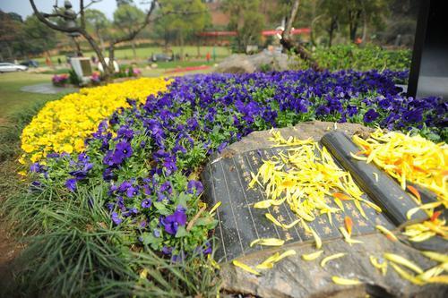 石门峰纪念公园的生态环保花葬。记者 肖僖 摄