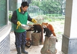 """小熊猫喜欢鸡蛋馅""""汤圆"""""""