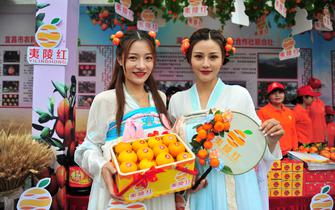 第七届湖北宜昌(夷陵)柑橘节精彩启幕