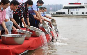 宜昌中华鲟自然保护区放归200余万尾鱼苗