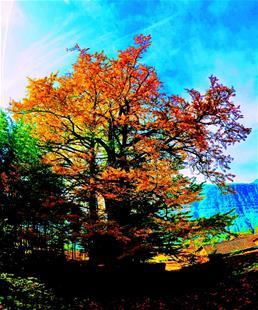 """图为:古银杏""""清太5号""""树龄3000多年,获评""""中国十大最美古银杏"""",挺立在巴东县清太坪镇海拔1000多米的绝壁天河下"""