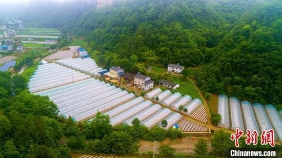 黄马河村蔬菜大棚。 胡传才 摄