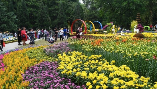 解放公园菊展上,百合与秋菊同框。 记者许魏巍 摄