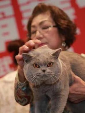 200只世界名猫武汉争霸最贵100多万