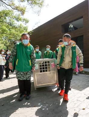 大熊猫姐妹花离汉返川