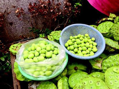 图为江城随处可见卖莲蓬的小摊