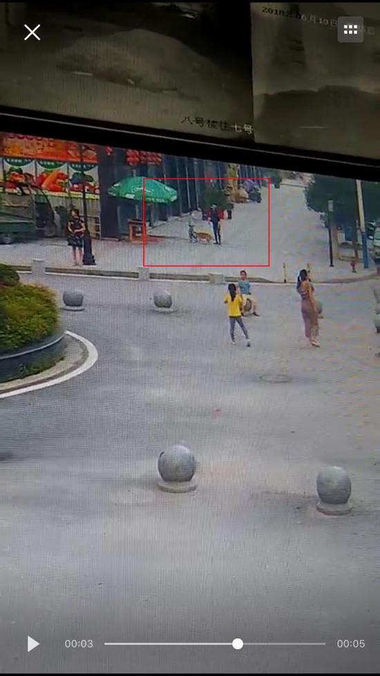 当地人士提供的视频显示,咬人的是一只黄色土狗。视频截图