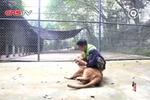 暖!狮子见到幼时救助自己的饲养员秒变大猫