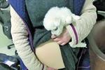 女大学生硅胶肚皮装小狗 试图蒙混上飞机被处罚