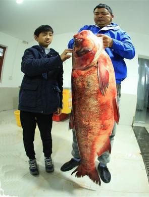 65斤!丹江口水库现野生鳙鱼王