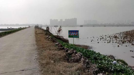 洪山城管设置标识牌提醒居民严禁种菜