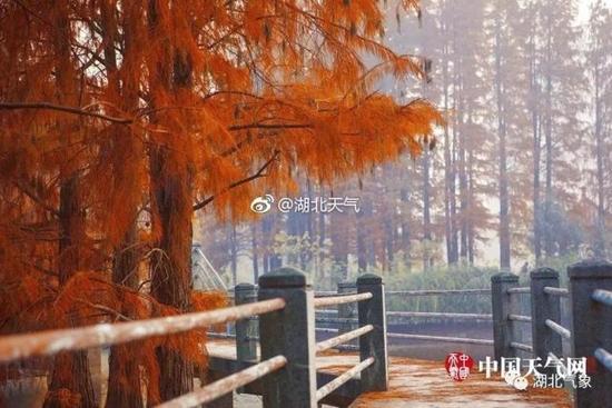 (武汉东湖风景秀美,和煦的阳光将叶子衬得分外金黄 图/陈石定、唐悦、冯光柳)