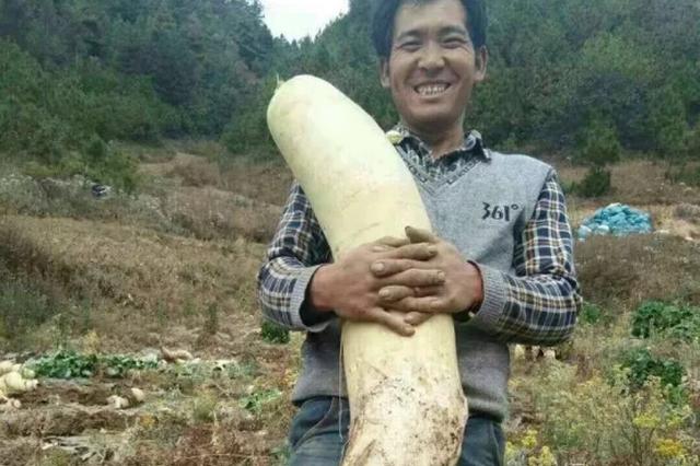 恩施一农民挖出世界罕见大萝卜 长1米多(图)