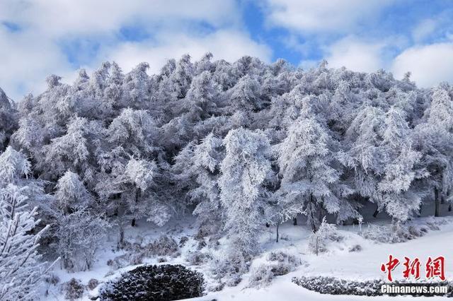 三峡云台荒现迷人雪景 纯美如童话世界