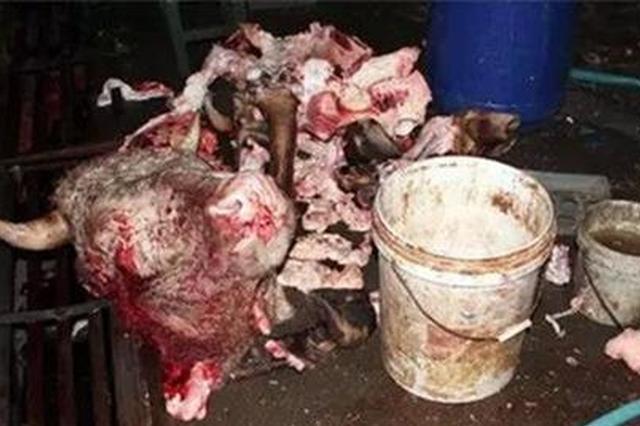 赤壁捣毁3个注水牛肉窝点 现场扣押1.6吨注水牛肉