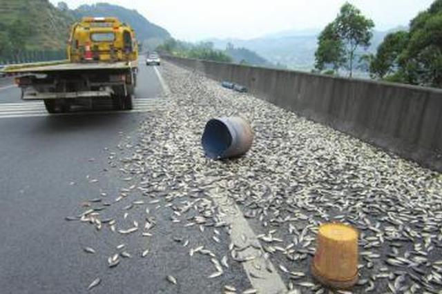 襄阳汉十高速龙王段两车相撞 生鲜运输车洒一地青鱼