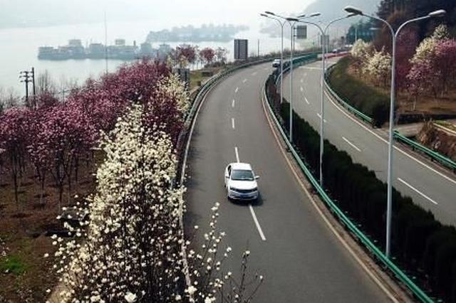 """三峡坝区现""""花廊""""景观 扮靓三峡守护长江"""
