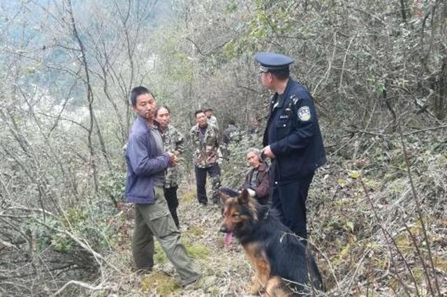 湖北一药农深山采药坠崖失踪 警犬引导民警救援