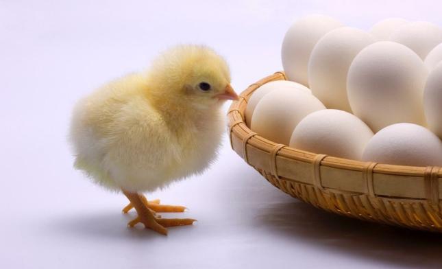 一个鸡蛋五种功效