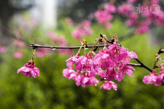 春分跟着太阳早睡早起
