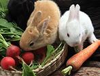 为什么要吃萝卜