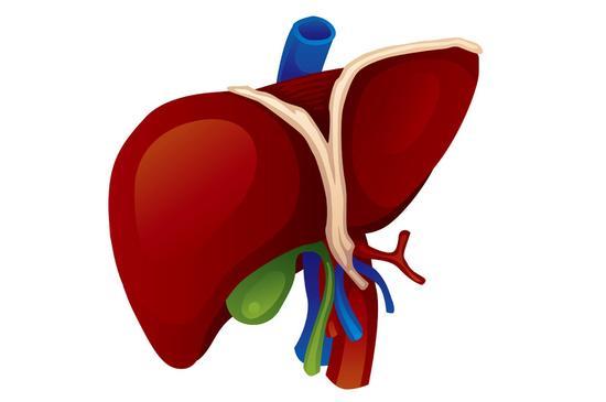 四个原因导致肝脏慢慢变坏