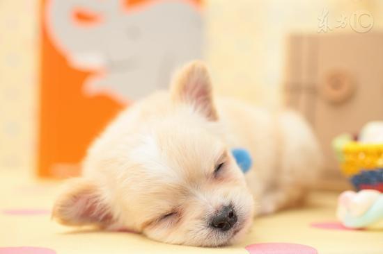 冬季深度睡眠才是第1大补