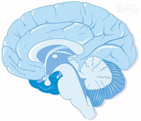 這樣睡覺可清理大腦垃圾|帕金森|大腦|睡姿
